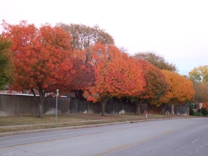 Photo of trees along street